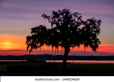 The morning sky, painted by the rising sun, silhouettes a tree draped with Spanish moss at the water's edge in the South Carolina Low Country.