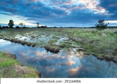 morning sky reflected in swamp water, Kampina, Netherlands