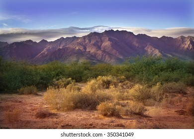 Morning in Sonora Desert at Phoenix, Arizona