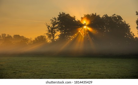 morning spirit on an early autum day in the wetlands of the rhine river in germany