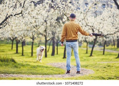 Morning in spring public park . Man playing with his dog (labrador retriever) between blooming trees. Prague, Czech Republic