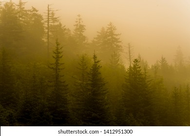 Morning summer mist in the pines along the Highland Scenic Highway, a National Scenic Byway, Pocahontas County, West Virginia, USA