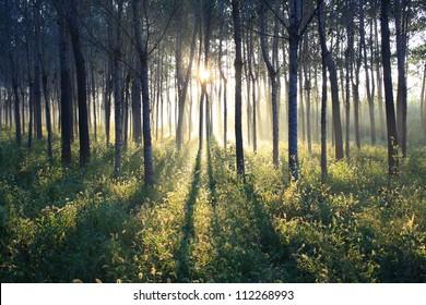 Morning sun beams in the summer park