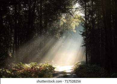 Morning sun falls into the forest after rain.