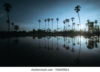 Morning sun in the field, Tan Dong reflected water in Sam Khok. Pathum Thani Province.
