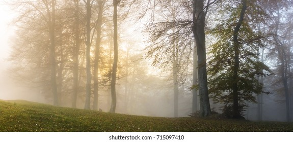The morning sun illuminates the fog in a beech forest
