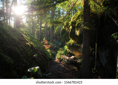 The morning sun lighting up the green lush temperate rain forest, full of moss and lichen covering rocks, and a red western cedar on a trail of Squamish, BC, Canada