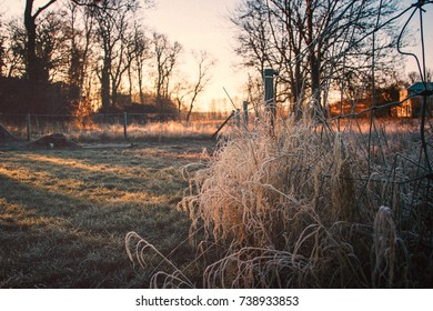 Morning sun lights on frozen grass