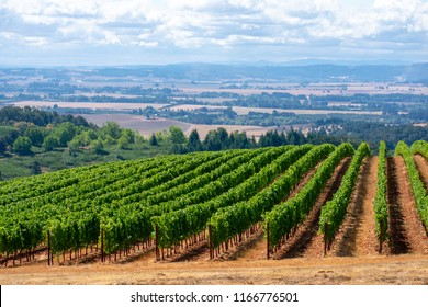 Morning sun on this summertime Oregon vineyard casts shadows across the bare dirt, rows lead the eye up a hill and across the valley below.