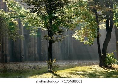 morning sun in the park in Pszczyna