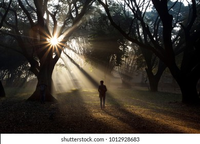 Morning sun rays captured while walking though Cubbon Park (a landmark in Bengaluru, India)