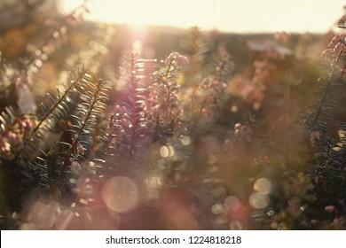 Morning sun rays in wild flowers, blured light, bokeh