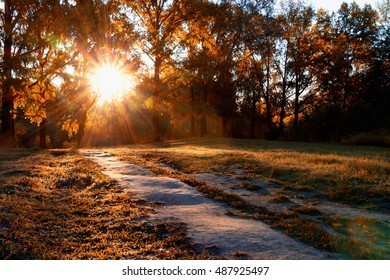 The morning sun rises and illuminates the path in the autumn forest