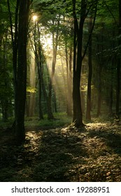 The morning sun shines trough the forest, an view only seen by those who rise early...