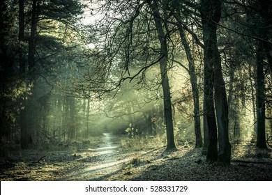 Sol matutino brillando a través de los árboles en un pequeño sendero forestal