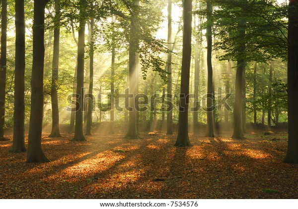 Morning sun, shining through the trees.