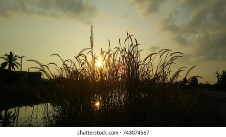 morning sun in side of river