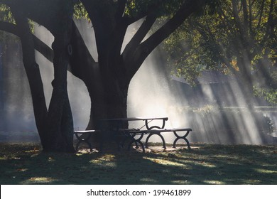 morning sunlight beams through rain covered foliage toowoomba queensland