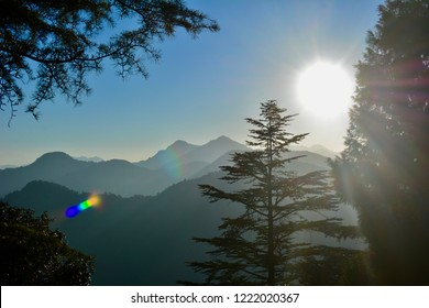 Morning Sunlight Coming Through Pine Trees in an Indian Hilly City in Himalayan Range