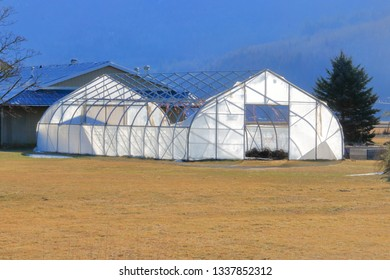 Morning sunlight illuminates a weathered damaged greenhouse after severe winds ripped the heavy plastic covering.