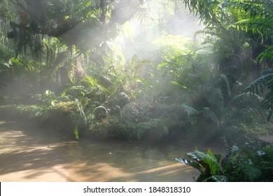 morning sunlight mist fog in park. foggy misty garden. water spraying from sprinkler for watering plant