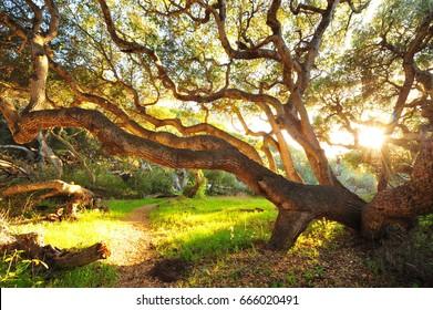 Morning sunlight is shining through the tree