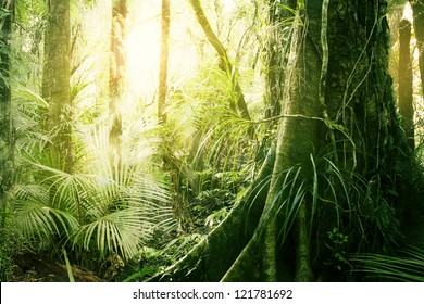 Morning sunlight in tropical jungle