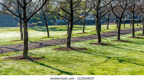 A morning sunlit diagonal tree lined path through All Nations Park in Northcote Victoria Australia.