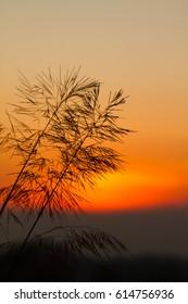 morning sunrice and beautiful sky