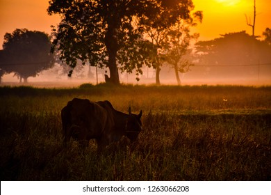 Morning sunrise In the countryside of Thailand