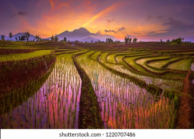 morning sunrise at paddy fields in north bengkulu asia indonesia, beauty color and sky natural light