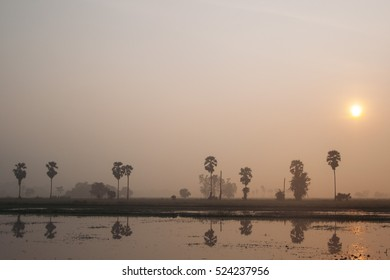 Morning sunrise with palm trees view in the mist Uthai-Thani , Thailand