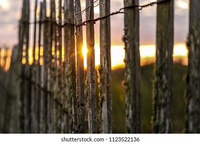 A morning sunrise photographed through an old dune fence in Galveston, TX.