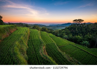 Morning sunrise at the rice terrace overlooking Ruteng town in Flores Indonesia