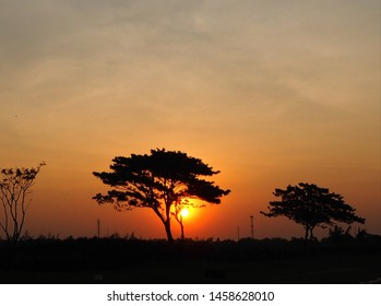 The morning sunrise scene, the sun rising up with golden light all over the sky, the front has a shadow of a hill, grass and big trees, which is a picture that looks calm and beautyful.