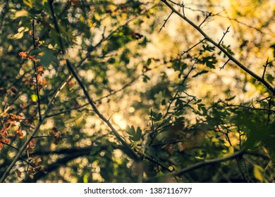 Morning sunshine inside nature and golden hour of photgraphy