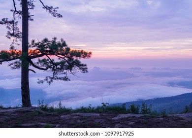 morning time view on the top of Phu Kradueng National Park  1200 msl, Loei province, Thailand