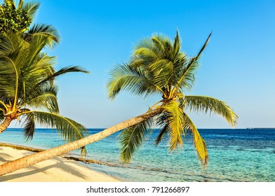 Morning tropical beach on the island Vilamendhoo in the Indian Ocean, Maldives