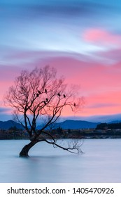 Morning twilight at the famous That Wanaka Tree (or The Lone Tree of Wanaka). This Willow tree with wet feet is perhaps the most photographed tree in New Zealand.