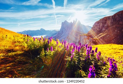 Morning view of the alpine valley in sunlight. Location place Puez-Geisler National Park, Seceda peak, Tyrol, Italy, Europe. Odle group is the landmark of Val di Funes. Discover the beauty of earth.