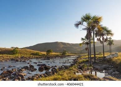 Morning view of Arabopo river with some Moriche palm trees (Mauritia flexuosa) in Bolivar state, Venezuela