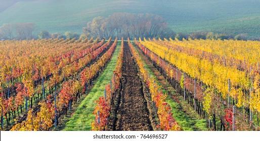 Morning view of beautiful autumn vineyards - South Moravia, Czech Republic