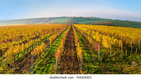 Morning view of beautiful autumn vineyards - South Moravia, Czech Republic
