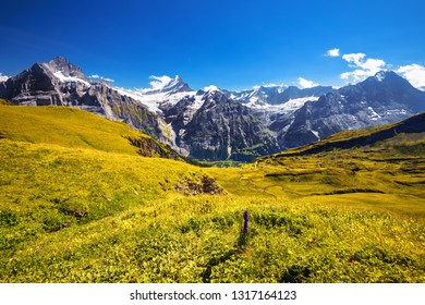 Morning view on Bernese range above Bachalpsee lake with Mounch, Eiger Faulhorn and Reti peaks. Popular tourist attraction. Location place Swiss alps, Grindelwald valley, Europe. Artistic picture.