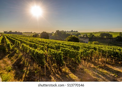 Morning view at wine yards of Saint Emilion in France