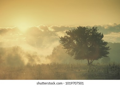 Morning vintage landscape with fog, sun and tree