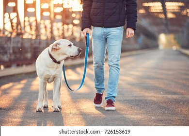 Morning walk with dog. Young man with his labrador retriever on the iron bridge at the sunrise.