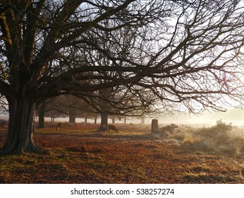Morning walk in Richmond Park