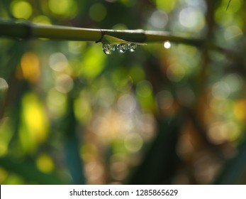 Morning water dew drops hanging on a branch with bokeh effect blurred background.  Feel morning fresh air.  Dew drops with macro photograghy.