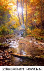 Morning in wild forest with real sun, colorful big trees and fast mountain river - autumn landscape